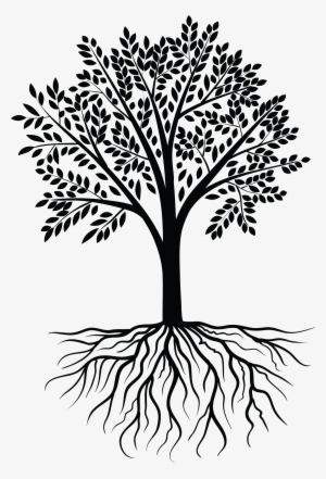 Vector Transparent Download Redwood Vector Root Tree With Roots