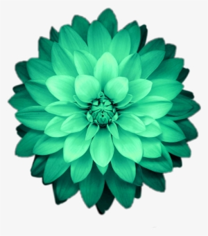 Flower Flowers Green Emeraldgreen Green Iphone X Wallpaper 4k Transparent Png 870x991 Free Download On Nicepng