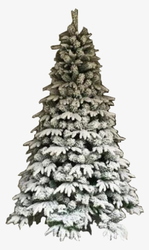 Christmas Tree Png Download Transparent Christmas Tree Png Images