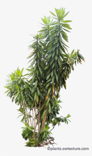 Bush Plant PNG & Download Transparent Bush Plant PNG Images