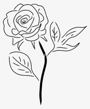 Rose Drawing Png Download Transparent Rose Drawing Png Images For
