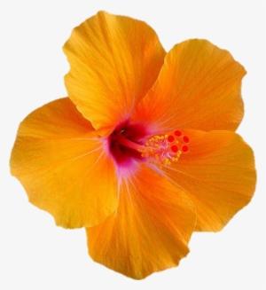 Vector Flor Flores Floral Pastel Circle Transparent Png