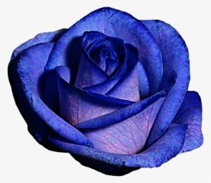 bc8b6f23c Blue And Purple Rose By Jeanicebartzen27 On Deviantart - Blue And Purple  Roses Png
