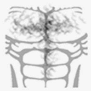 Real Muscles Shirt Roblox Chest Hair Png T Shirt Roblox Musculos Transparent Png 420x420 Free Download On Nicepng