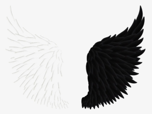 Wing Png Download Transparent Wing Png Images For Free Nicepng