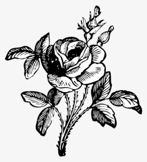 Black And White Rose Png Download Transparent Black And White Rose
