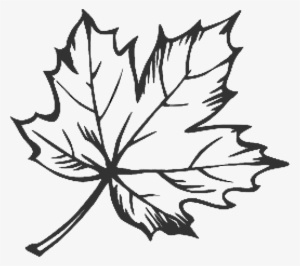 Clipart Free Maple Leaf Google Search Doodles Pinterest Maple Leaf Tattoo Outline Transparent Png 776x689 Free Download On Nicepng