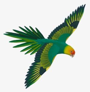 Parrot Flying PNG & Download Transparent Parrot Flying PNG