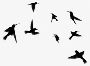 Flying Bird PNG & Download Transparent Flying Bird PNG Images for