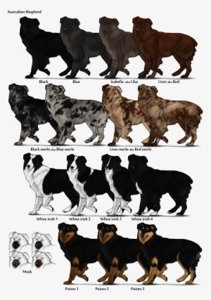 Normal Aussie Coat Coloring - Australian Shepherd Health ...   427x300