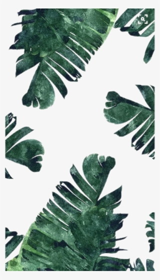 Green Leafs Png Download Transparent Green Leafs Png Images For Free Page 6 Nicepng