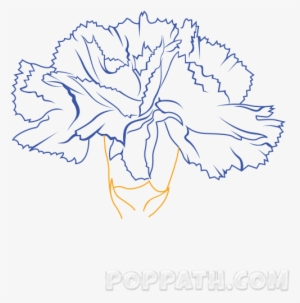 Carnation Drawing At Getdrawings Drawing Transparent Png 544x544 Free Download On Nicepng