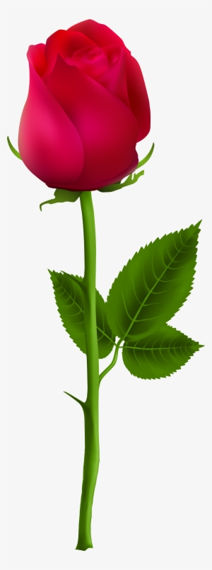 Rose Png Download Transparent Rose Png Images For Free Nicepng