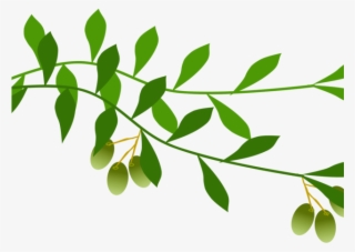 Autumn Tree Branch 5999*2681 transprent Png Free Download - Flower, Leaf,  Tree. - CleanPNG / KissPNG