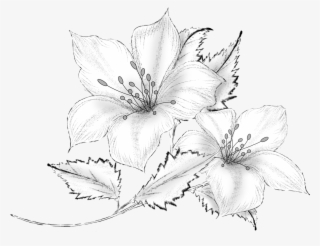 Collection Of Free Drawing Download On Ubisafe Pencil Flower Drawing Transparent Png 1104x824 Free Download On Nicepng