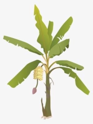 Growing Fruit Trees Nature Life Transparent Png 1600x1600 Free