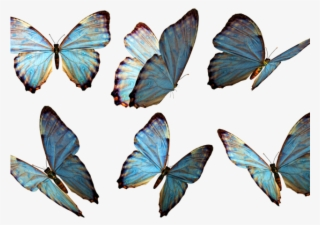 36537b30b9486 Monarch Butterfly Clipart Deviantart - Real Butterfly Png ...