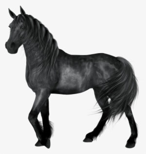 Horse Png Download Transparent Horse Png Images For Free Nicepng