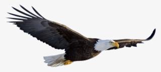 American Flag Eagle Png Download Transparent American Flag Eagle