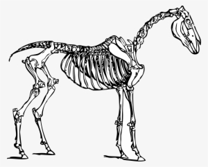 Skeleton Coloring Pages - GetColoringPages.com | 241x300