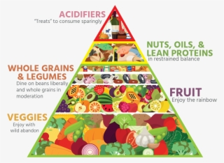 Bailey S Food Pyramid 2016 Healthy Food Pyramid Transparent Png 1024x767 Free Download On Nicepng